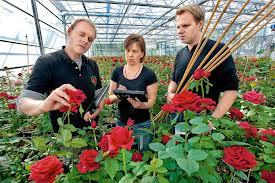 Цветочный бизнес-4