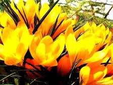 Цветочный бизнес-6