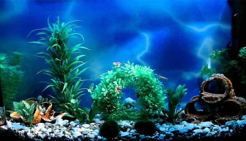 Svetodiody-dlya-akvariumov.jpg