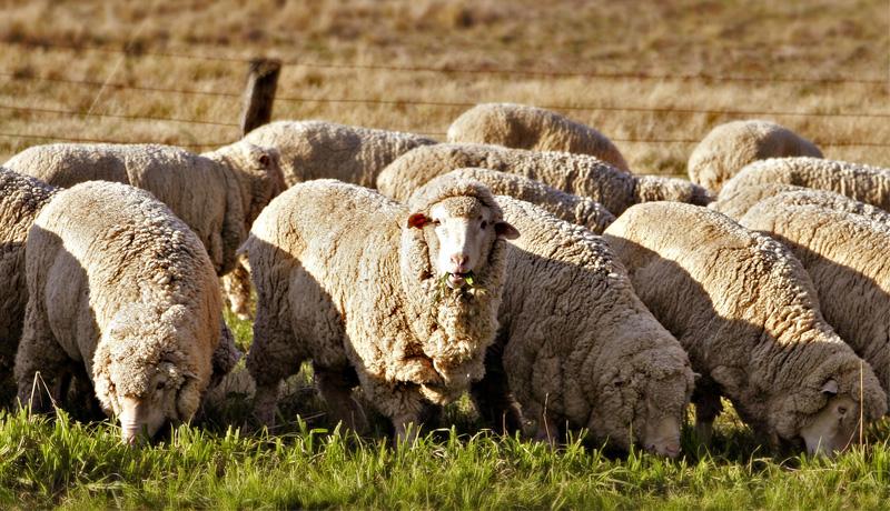 Скачать бесплатно примерный бизнес-план овцеводство