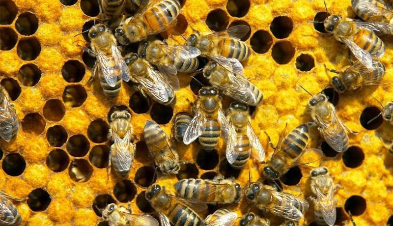 Бизнес-план пчеловодство