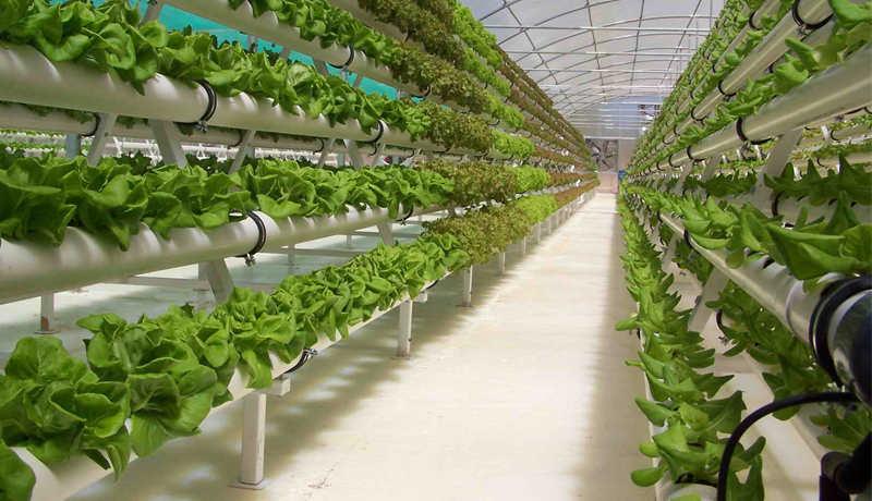 Бизнес-план тепличного хозяйства