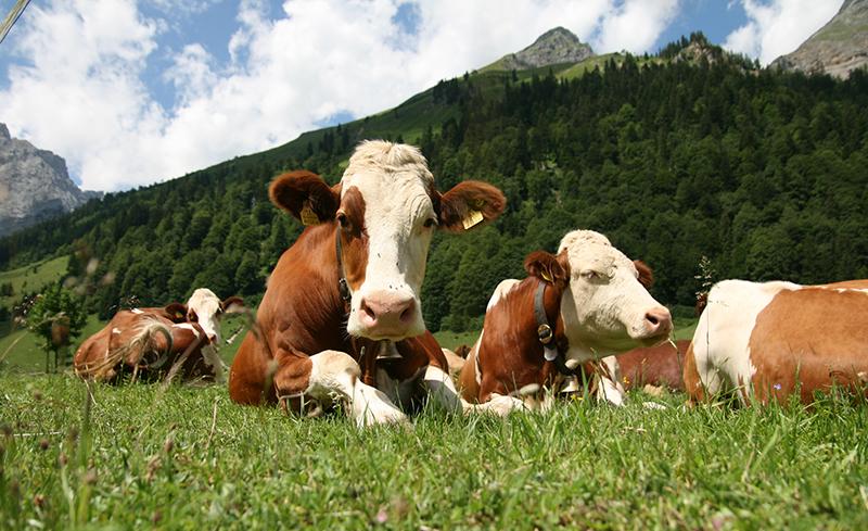 С 2015 г. особое внимание будем уделять животноводству: врио курганского губернатора