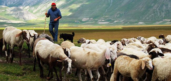 Идеи малого бизнеса в Белоруссии также рассматривают открытия фермы в сельской местности