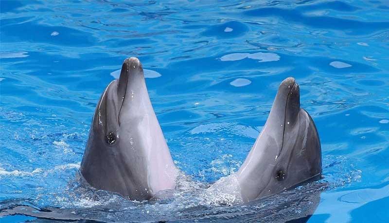 delfinarij.jpg